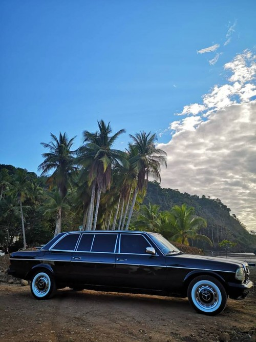 JACO-BEACH-PALM-TREE-LIMOUSINE-COSTA-RICA.jpg